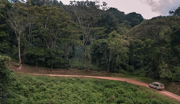 Drive through Bwindi National Park